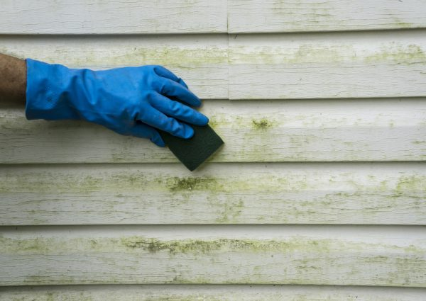 Spring Cleaning: Exterior